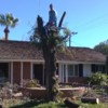Tree service y removal co.